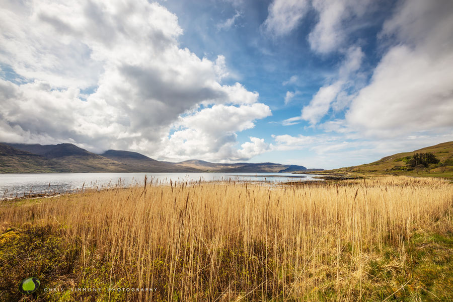Mull Reeds