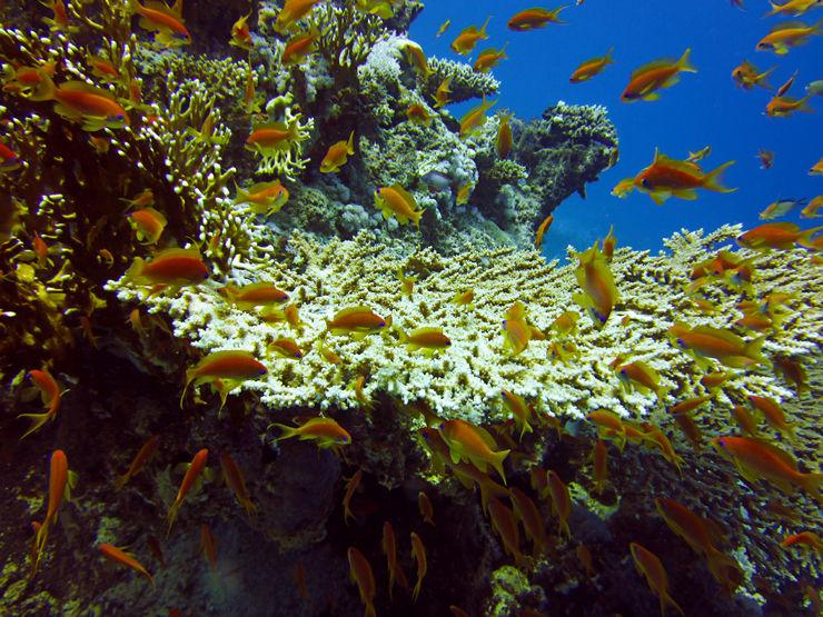 Reef I