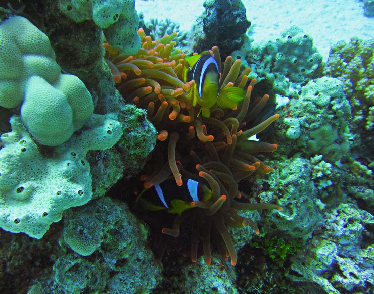 Reef II