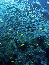 Reef III