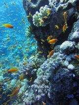 Reef IX