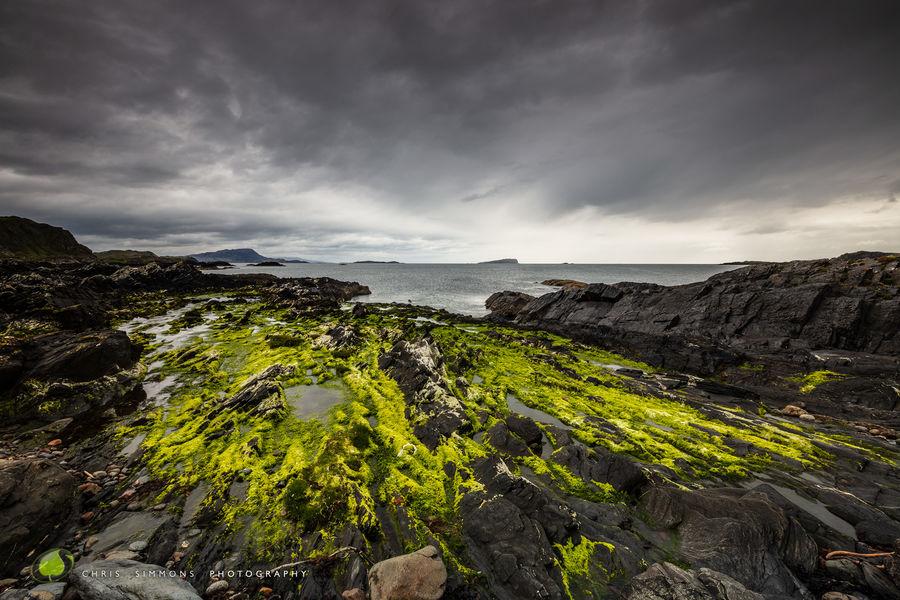 Seaweed & Rock