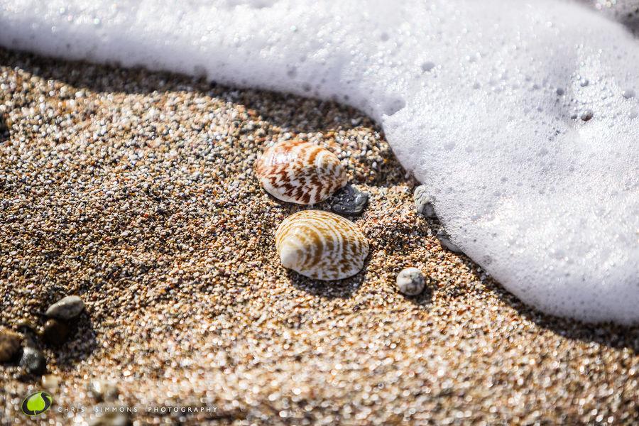 Shells & Wave - rev