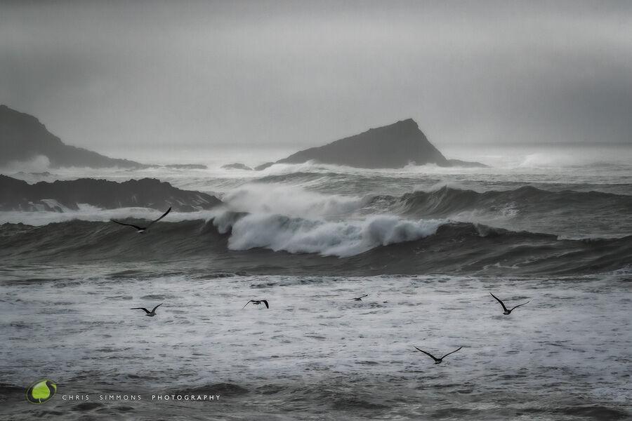 Storm Greys & Gulls II - Art