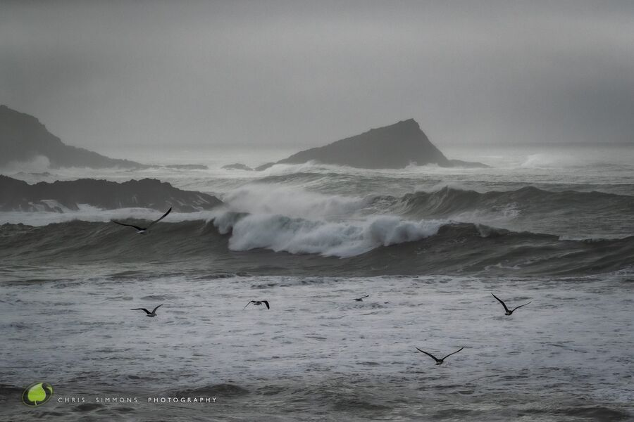 Storm Greys & Gulls II
