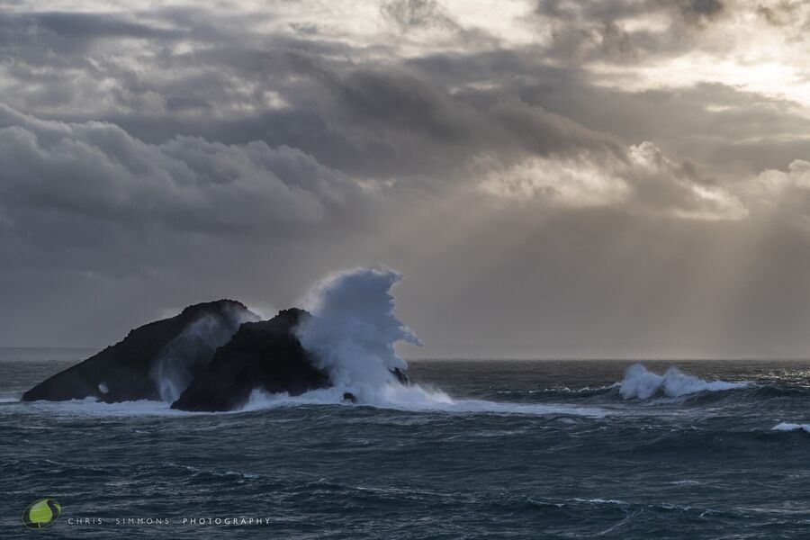 Storm Gulls III