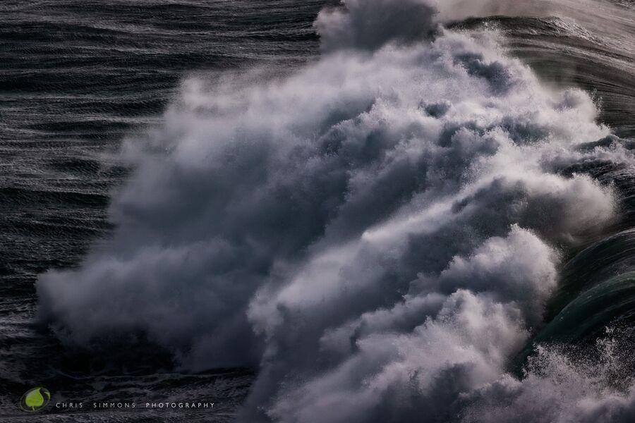 Storm Gulls - IV