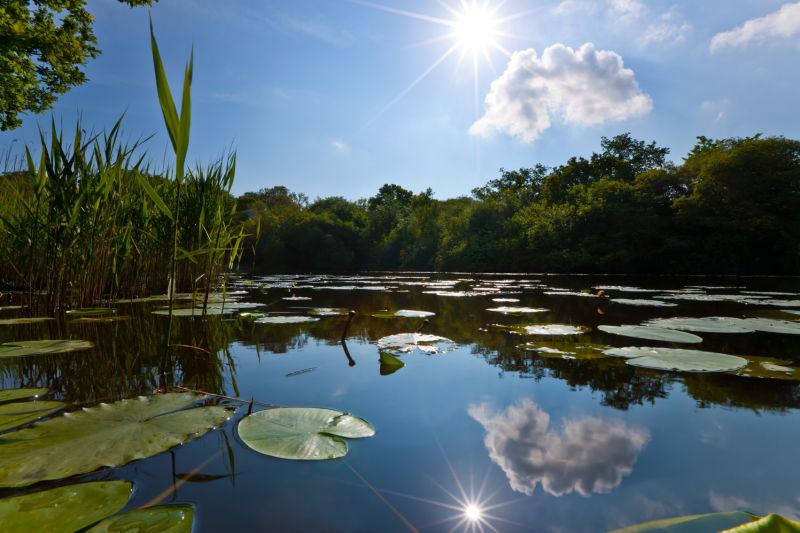 Wake Pond Reflections