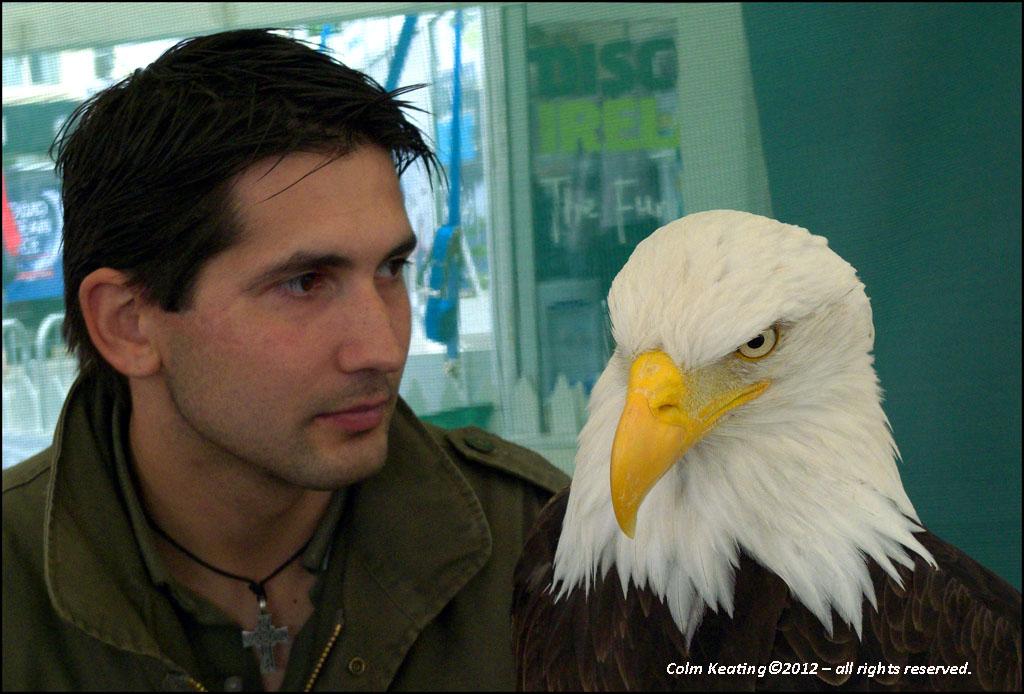 A bald-headed eagle...
