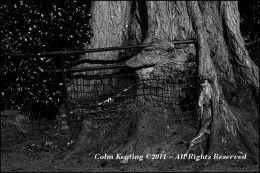A tree's revenge.