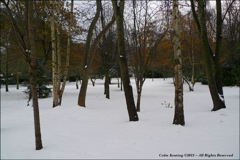 Merrion Park in the snow...