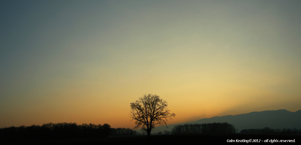 A single tree standing proud in Versonnex.