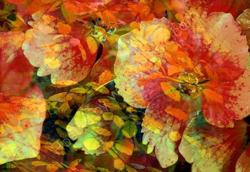 Autumn Glaze