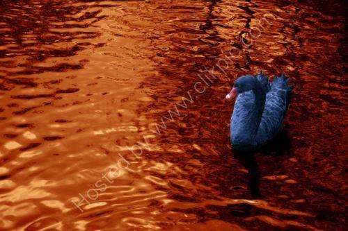 Blue Swan On Bronze