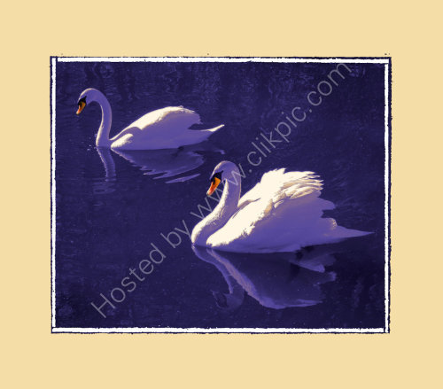 Lilac Swans
