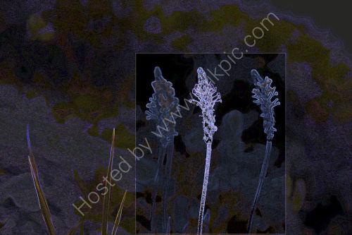 Mountain Grass Fracture