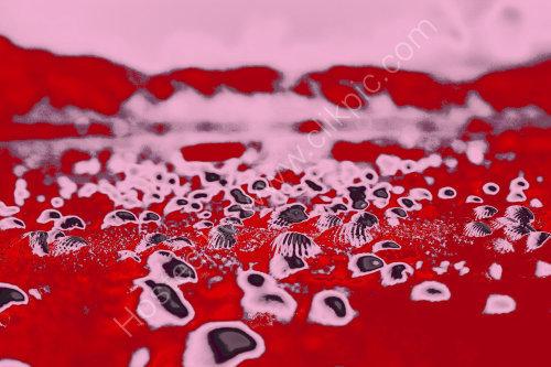 Red beach Shells