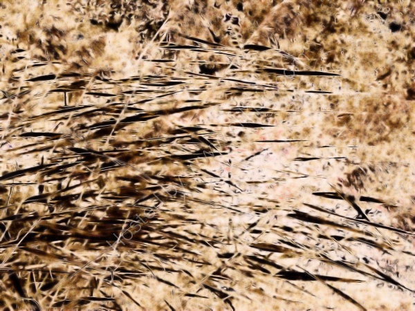 Reed-Defined