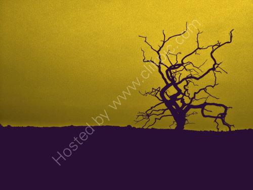 The Snape Tree