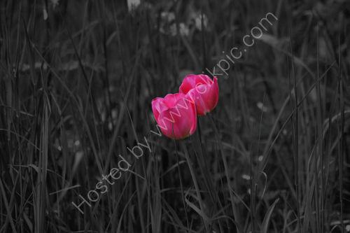 Pink Alone