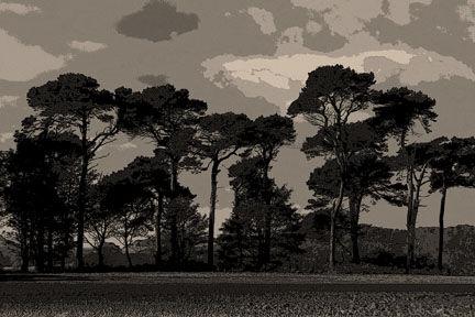 Tyne Trees