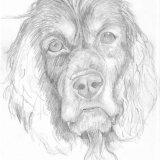 Daft Dog