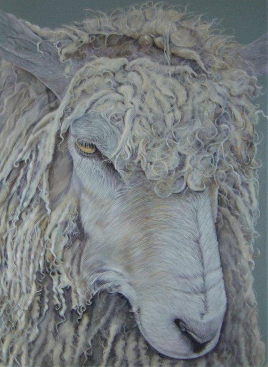Melancholy Sheep