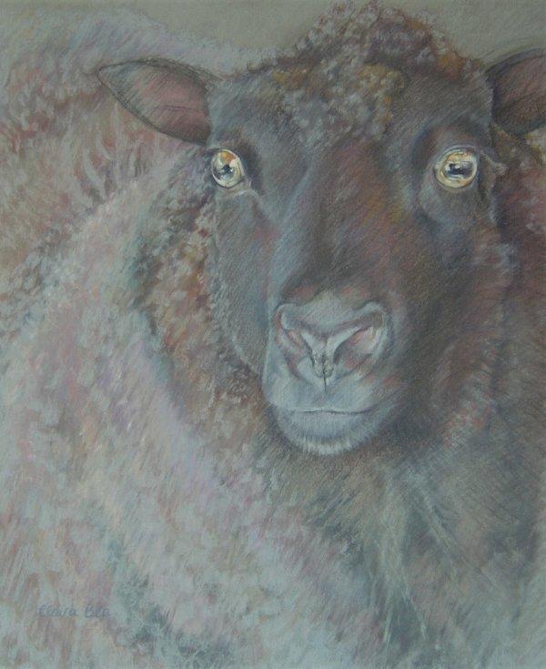 Rusty Sheep
