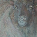Rusty Sheep