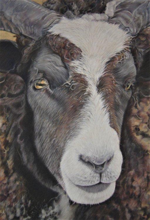 Serious Sheep