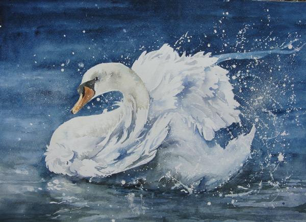 Bathing Swan