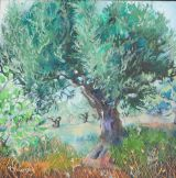 Portuguese Olive Tree