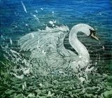 Swan Splash II