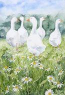 Chamomile Geese 1