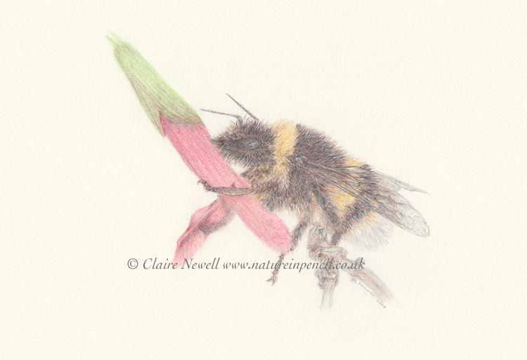 'Bumble Bee'