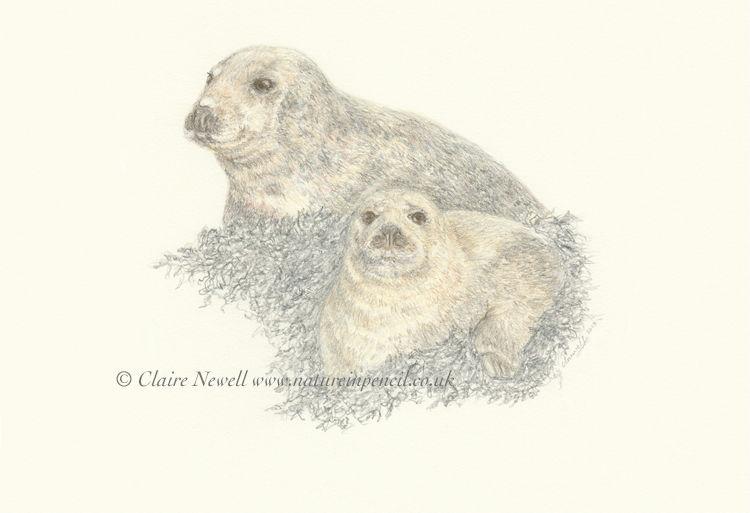 'Grey Seals'