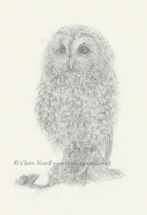 'Tawny Owl'