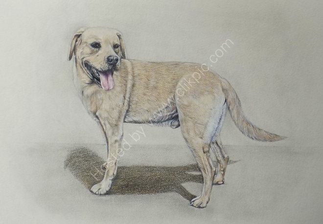 Bentley in Watercolour and Pencil