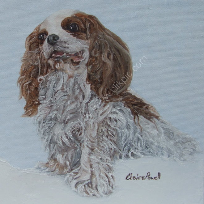 Cassie the King Charles Spaniel