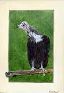 Vinnie the Vulture