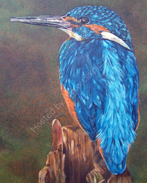 Kingfisher in Oils
