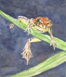 Wot! Frog in watercolour