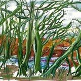 Ellison's pond alders