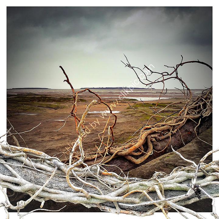Adrift Again - Hilbre Island