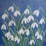 Snowdrops 3