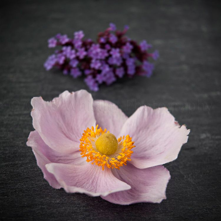Final bloom