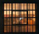 Liverpool window