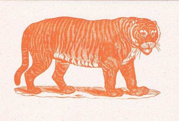 Rto-003-24 Tiger