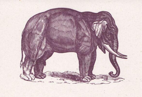 Rto-003-28 Elephant