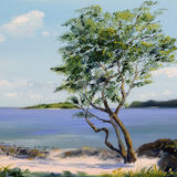 That Tree at Kippford
